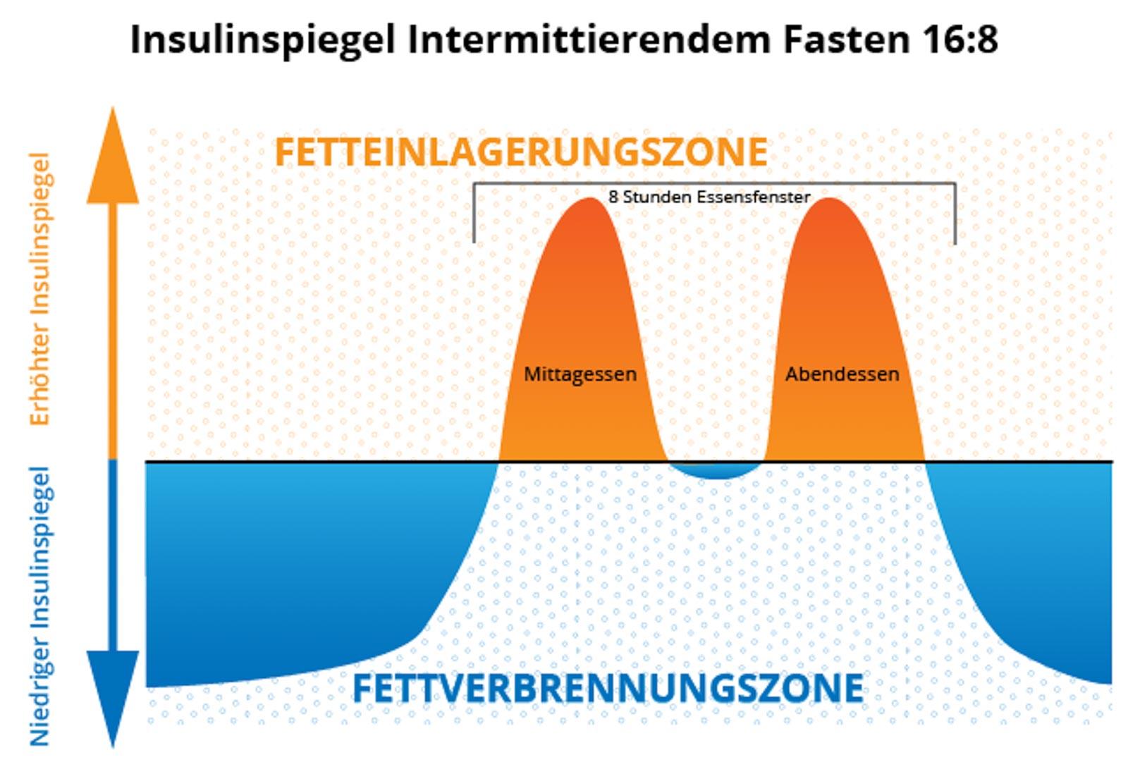Insulinspiegel bei IF 16:8 - Die Grafik ist nicht exakt und dient nur der Veranschaulichung