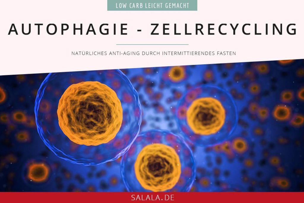 Autophagie und Zellrecycling I by salala.de I natürliches Anti-Aging durch intermittierendes Fasten